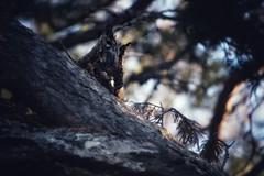 DFL_8256-01 (MILESI FEDERICO) Tags: milesi milesifederico milesifedericofoto federicomilesifoto valsusa valdisusa visitpiedmont valliolimpiche valledisusa visititaly visitvaldisusa piemonte piedmont inmontagna nikon nikond7100 nital iamnikon italia italy europa europe altavallesusa altavaldisusa alpi alpicozie alps alpes salbertrand parconaturalegranbosco parconaturale parchialpicozie 2018