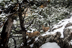 0095_DSC_2683 (marcellszmandray) Tags: ausztria hohewand gutensteinialpok alpok viaferrata kirándulás tavasz hó