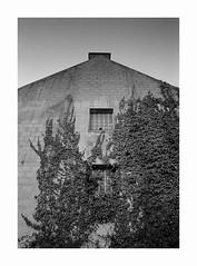 L'Assaut (Oeil de chat) Tags: nb bw monochrome film pellicule argentique 35mm kodak trix voigtlander bessa r2a colorskopar 21mm façade abandonné lierre assaut