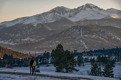 In the Shadow of the Mountains (RkyMtnGrl) Tags: landscape nature scenery vista mountains elk bull evening light valley estespark drygulchroad colorado 2019