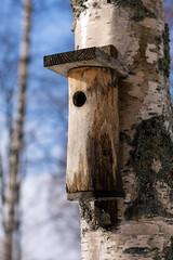Nest box (Henrik Axelsson) Tags: bergslagen ludvika birdhouse foliage fågelholk himmel landsbygd sky tree träd dalarnacounty sweden se