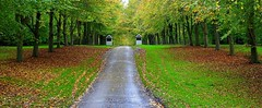 alley (majka44) Tags: alley green grass travel light colors tree road park nature landscape autumn leaves england