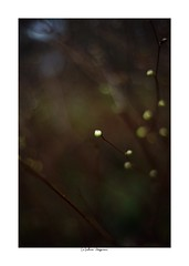 2019/3/3 - 4/15 photo by shin ikegami. - SONY ILCE‑7M2 / Voigtlander NOKTON CLASSIC 40mm f1.4 SC VM (shin ikegami) Tags: asia sony ilce7m2 sonyilce7m2 s7ii 40mm voigtlander nokton nokton40mmf14sc tokyo photo photographer 単焦点 iso800 ndfilter light shadow 自然 nature 玉ボケ bokeh depthoffield naturephotography art photography japan earth