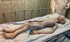 """Alien Prop created for the 1994 Showtime Movie """"Roswell."""" (lhboudreau) Tags: movie film roswell prop movieprop alien alienautopsy internationalufomuseum roswellnewmexico showtimesroswell 1994 autopsy motionpicture fake weird bizarre oddity ufo flyingsaucer crash bed autopsyroom table showtimemovie showtime"""