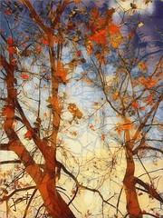 Trees & shadows (aRtphotojart) Tags: trees shadows branches ilustracion