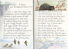Thaw (Hornbeam Arts) Tags: hedgehog sketch watercolour poem clare