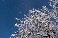 Blast off   *Explore (sarah_presh) Tags: snow snowy winter england uk blue sky fresh nikond750