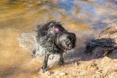 20190215-IMG_8704 (Alderbabbsack) Tags: struppi hund