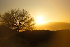 Ramsholt church (shanahands2) Tags: february sunrise churchyard gravestones ramsholt d750 nikon