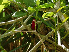 Red 4 (moarastaeblein) Tags: bertioga sp brazil