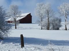 Mountain View Road Barn (bencbright) Tags: winter tree frost snow barn latah idaho landscape sx60 canonsx60 canon