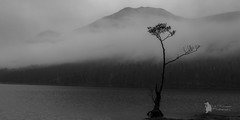 lone tree buttermere (Lumen01) Tags: water tree reflections mist hills mountains fog bw landscape nikon d800 on1 on1raw lakedistrict buttermere