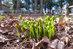 19o2833 (kimagurenote) Tags: sprout 東高根森林公園 higashitakane forest park 川崎市宮前区 miyamaekawasaki