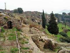Pompeya (EduOrtÍn.) Tags: ruinas arqueología pompei pompeya italia campania arbol hierba