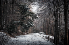 Wintry walkway (V Photography and Art) Tags: walkway winter snow trees bench picnictable snowcovered forest walk cold freezing