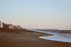 (i threw a guitar at him.) Tags: whirlwind whirl wind virginia beach ocean sea coast atlantic 2019 sunset sky waves pier lonely person single hotels tourism winter season gulls flying