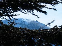 ott van a Szekatúra / there is the Secătura peak (debreczeniemoke) Tags: tél winter hó snow túra hiking erdő forest fa tree hegy mountain gutin gutinhegység gutinmountains szekatura secătura olympusem5