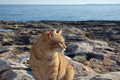 DSC02016 Rubio, Mallorca (Fernando Sa Rapita) Tags: rubio sarapita mallorca baleares cat gato gatito mascota pet sony sonyrx100 sonydscrx100