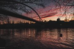 sunset... (hobbit68) Tags: water fujifilm xt2 wasser river frankfurt fluss fechenheim trees bäume clouds wolken himmel sky sonne sonnenschein sunset sonnenuntergang brücke bridge