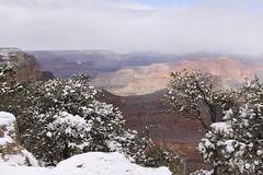 IMG_8604 (patterpix) Tags: grandcanyon arizona snow trees winter canyon storm