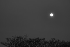 Spring Supermoon,Aberdeen_Mar 19_409 (Alan Longmuir.) Tags: monochrome grampian aberdeen misc sky moon springsupermoon