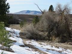 Phillips Farm looking toward Kamiak Butte (bencbright) Tags: phillipsfarm latah idaho sx60 canonsx60 spring explored