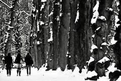 (Jamal El) Tags: tree snow trees neige arbre arbres nature walking boom zwart wite zw black white blackwhite noir blanc nb noirblanc people wandeling ballade enmarchant park parc hiver landscape paysage belgique belgium belgie brussel brussels bruxelles instant instantané