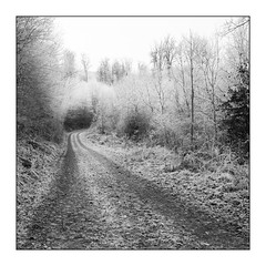 White woods! (Wilco1954) Tags: freezing mono ice path winter square woods
