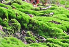 Forest of Moss (Elisa1880) Tags: moss mos plant den haag the hague solleveld