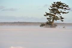 Le vent de Rawdon / The Rawdon wind (Joanne__) Tags: paysage nature exterieur hiver winter neige snow nikond7200 froid cold wind vent