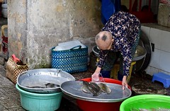 Elderly Vendor Tends to Her Fish for Sale (Ginger H Robinson) Tags: elderly woman vendor fish early morning saigondistrict1 large market historiclandmark saigon hcmc vietnam southeastasia water pan tray tub catfish