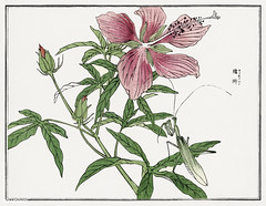 Flower and leafs illustration from Churui Gafu (1910) by Morimot (Free Public Domain Illustrations by rawpixel) Tags: antique art artwork asia asian blooming bug cc0 churuigafu colorful creativecommons0 culture design drawing east eastern fauna flower garden green habitat illustration insect japan japanese leaf morimototoko name nature old oriental pink plant print publicdomain rustic summer traditional vintage wild woodblock