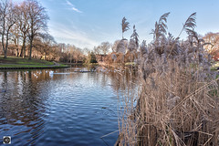 The Memories Remain. (alundisleyimages@gmail.com) Tags: park greenbankpark publicspaces municipal lake reeds bullrushes weather grass winter sky liverpool merseyside trees nature landscape swans ducks animals birds northwest england