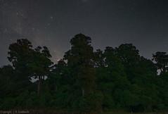 Shadow giants of the rain forest - Pureora (NavmanNZ) Tags: pureoraconservationpark northisland newzealand fujigfx50r canontse24f35lii milkyway