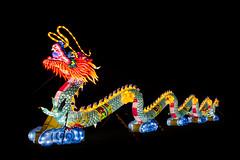 Der Große Drache (oliverhoffmann77) Tags: china light licht festival chinalightfestival figur leuchten beleuchtung drache dragon zoo köln cologne colonia keulen lichtinstallation phantasie tier asiatisch leuchtdrache