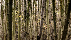 Winter trees (miltonpics) Tags: england kent plants shoreham trees uk unitedkingdom sevenoaks gb