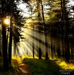Allow Nature's Peace to flow into you as Sunshine flows into Trees (barbara_donders) Tags: natuur nature forest bos sunbeams zonnestralen sunlight zonlicht mooi prachtig beautiful magisch magical