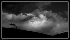Résister...... (faurejm29) Tags: faurejm29 canon ciel campagne nature nb sky paysage nuages