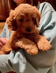 Hi I'm Ginger