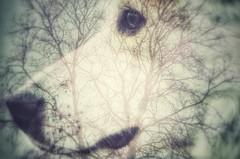 instinct (***étoile filante***) Tags: dog hund tree baum overlay beauty schönheit animal tier nature natur life leben emotions soulful pentax