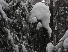 La forêt enchantée 2/The enchanted forest 2 (bd168) Tags: tree arbre neige snow winter hiver em10markii m1442f3556ez