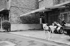 🐶🐶🐶 (Janeprogram) Tags: пленка 35mm blackandwhite bnwphotography filmphotography ilfordxp2super400