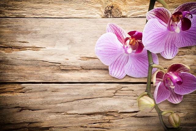 Обои wood, орхидея, pink, orchid картинки на рабочий стол, раздел цветы - скачать
