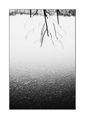 Au pays des Ombres / In the Land of Shadows #9 (Napafloma-Photographe) Tags: 2016 architecturebatimentsmonuments bandw bw cuisinealimentationnourriture fr france natureetpaysages personnes techniquephoto arbre blackandwhite eau galets napaflomaphotographe noiretblanc noiretblancfrance ombre photographe reflet vitre châteaulacoste monochrome provence