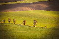 Wavy  autumn fields in Moravian Tuscany, Czech Republic (PhotoVision by Pavel Rezac) Tags: agriculture autumn background beautiful chapel countryside cultivation czech environment europe famousplace farm farmland field fields grass green harvestfield hill hills hillside landscape light line lines meadow moravia natural nature plant republic rural scenery seeds shadows spring stripe stunning summer sunny sunrise sunset trees tuscany view wave waves wildlife wine yellow