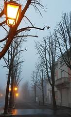 Mattino d'inverno (Aellevì) Tags: nebbia foschia alberi lampione luce atmosfera