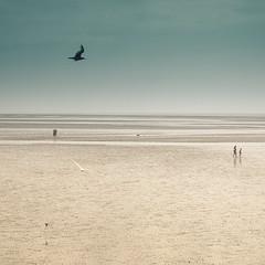 Southport (Carole Rannou) Tags: southport tide beach sea merseyside mersey england uk angleterre seascape horizon birds oiseaux jetée pier