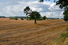 Landschaft mit Baum (antje whv) Tags: schleswigholstein ostholstein baum tree landschaft landscape felder