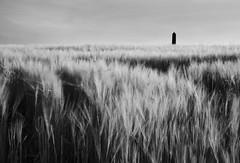 The Beauty of a Cornfield (annemcgr) Tags: portmarnock dublin tower corn movement ir infrared monochrome blackwhite