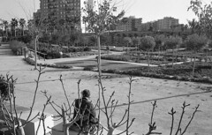190104_Parc_Central_002 (Stefano Sbaccanti) Tags: bw blackandwhite bn parccentral valencia minox35gl kentmere400 bellinihydrofen analogicait analogue analogico argentique spain spagna selfdeveloped 2019 city